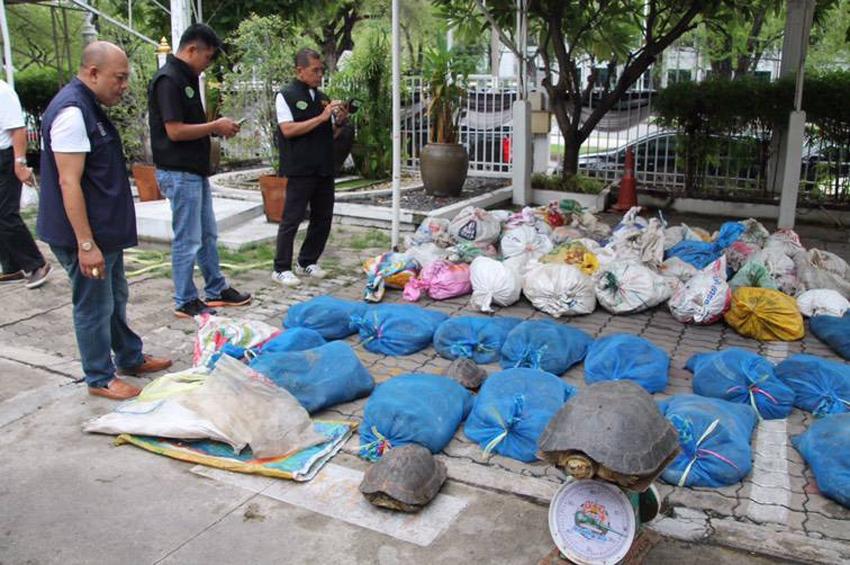 Wildlife Justice Commission เผยแพร่รายงานตีแผ่การค้าเต่าน้ำจืดและเต่าบกอย่างผิดกฎหมายในเอเชียตะวันออกเฉียงใต้