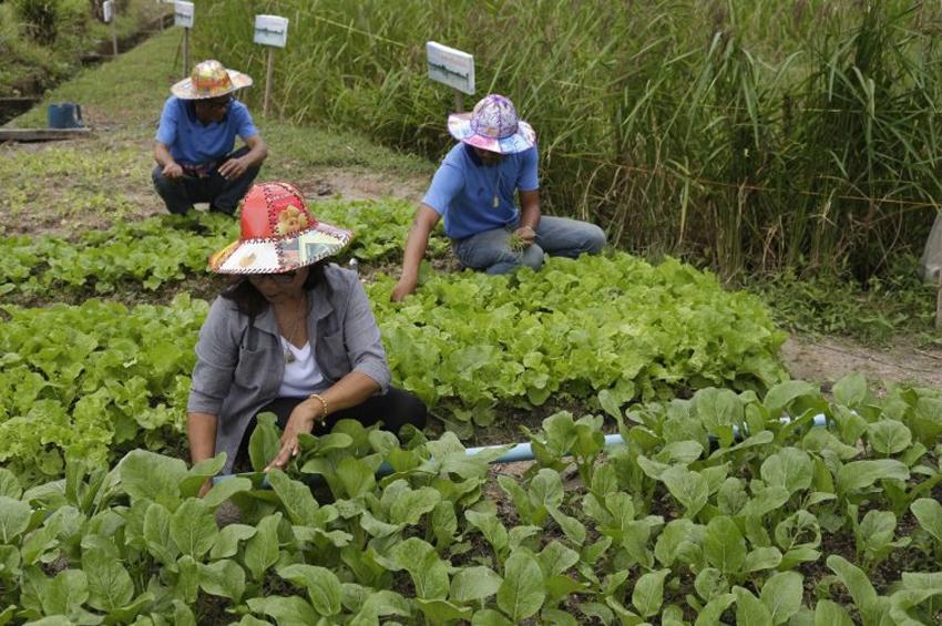 """""""กล้วยเภา"""" หมู่บ้านเกษตรอินทรีย์ไม่มี """"ถังขยะ"""" พลังชุมชนแก้ปัญหาขยะ สู่การสร้างสุขภาวะที่ยั่งยืน"""