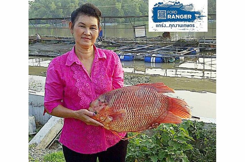 """ปลาแรด คือ """"ปลาทองคำ"""" ของเกษตรกรลุ่มน้ำสะแกกรัง จ.อุทัยธานี"""