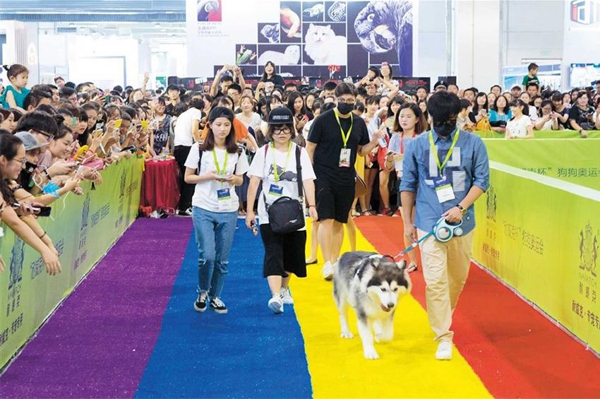 """""""Pet Fair Asia"""" ประสบความสำเร็จอย่างท่วมท้น"""