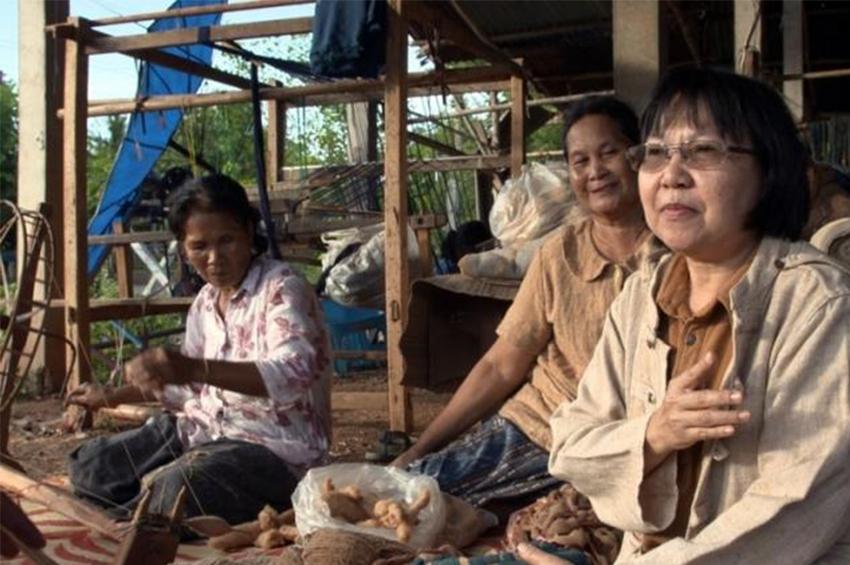 'ตากฟ้า 6' ฝ้ายเส้นใยสีน้ำตาลธรรมชาติพันธุ์แรกของไทย