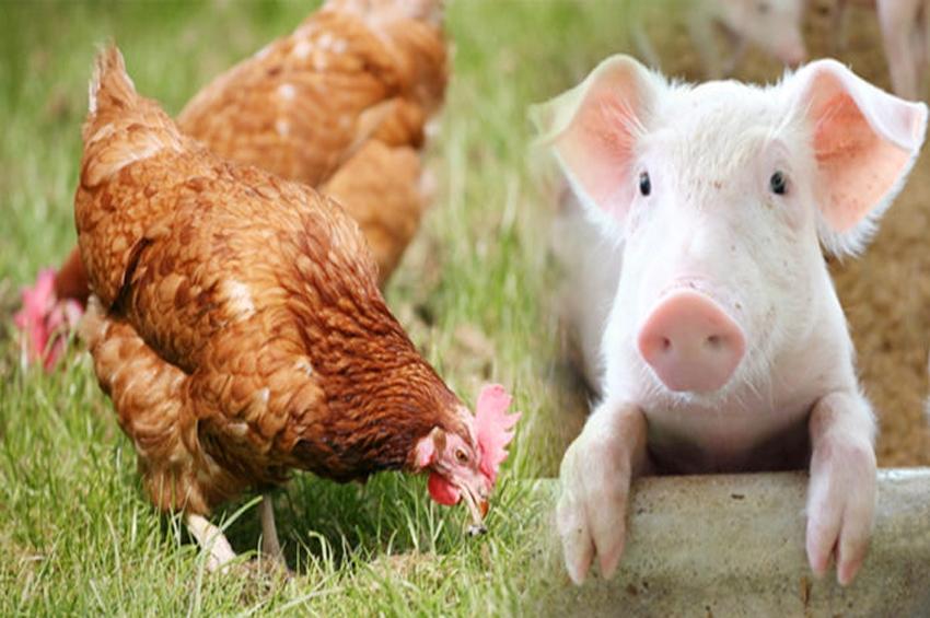 เลี้ยงสัตว์อย่างไร ให้สุขภาพดี มีความสุข ไม่มีกลิ่น…ที่นี่มีคำตอบ